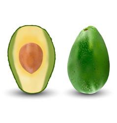 set of realistic green avocado vector image