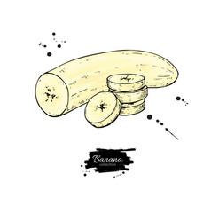 banana sliced and peeled piece drawing vector image vector image