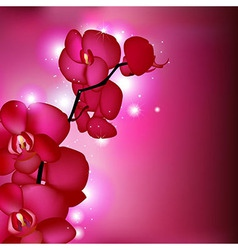 Pink Orchids vector image vector image