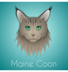 Maine coon vector image