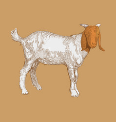 hand drawn goat vector image vector image