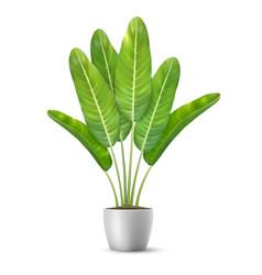 Banana tree leaves in flower pot vector