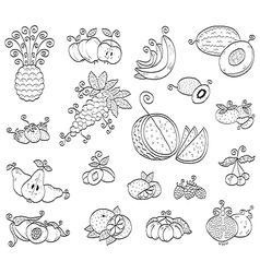 doodle fruits and berries vector image