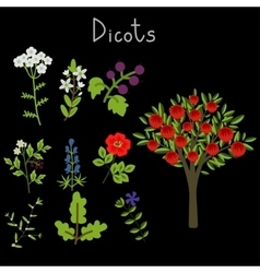 Examples of dicots vector