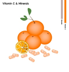 Orange Fruits with Vitamin C on White Background vector