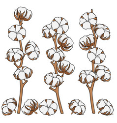set of color with cotton branches vector image