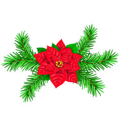 poinsetia and spruce branches vector image vector image
