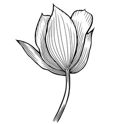 spring flower image vector image vector image