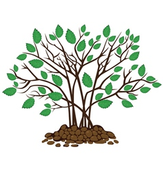 Bush with leaves in the soil vector image
