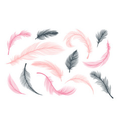 fluffy feathers abstract pink and black plumes vector image