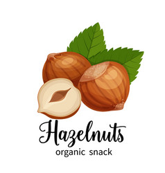 Hazelnut in cartoon style vector