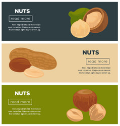 healthy nutritious nuts promotional internet pages vector image