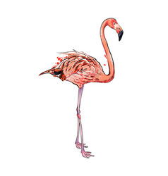 pink flamingo from a splash watercolor colored vector image