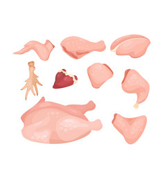set different types chicken vector image