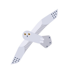 Snowy owl flat nyctea vector