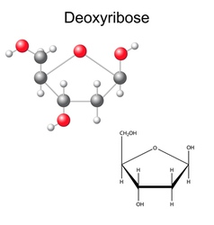 Structural chemical formula of deoxyribose vector image