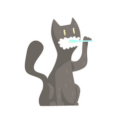 cute cartoon grey cat brushing teeth with tooth vector image vector image