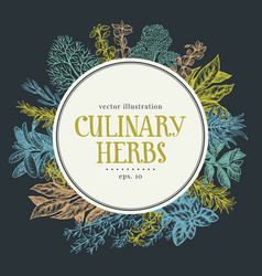 hand drawn frame with culinary herbs and spices vector image