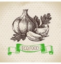 Hand drawn sketch garlic vegetable Eco food vector image vector image