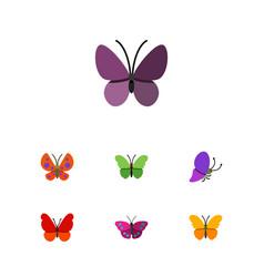 Flat moth set of archippus milkweed moth and vector