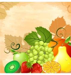 fruit still life vector image vector image