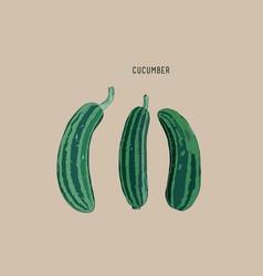 Cucumber sketch vector