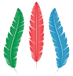multicolored feathers on white vector image