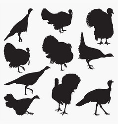 turkey silhouettes vector image