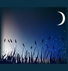Meadow at night vector image vector image