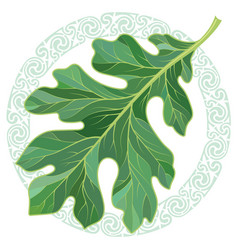 Oak leaf in summer coloring and celtic magic vector