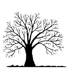 Tree without leaves silhouette vector