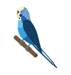 Budgerigar parakeet parrot or budgie bird in flat vector