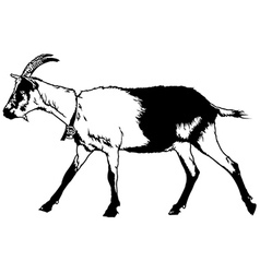 Goat from Profile View vector image