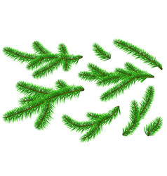 Graphic realistic new year pine fir tree branches vector