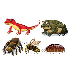 Small animals vector image vector image