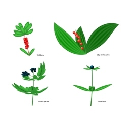 Forest poisonous berries vector