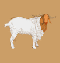 Hand drawn goat vector