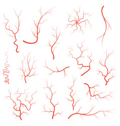 Human red eye veins set anatomy blood vessel vector