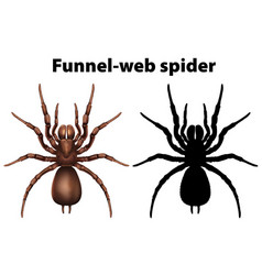 Funnel web spider in silhouette and colored vector