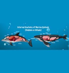 Internal anatomy marine animals dolphin vs vector