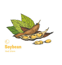 soybean hand drawn set vector image