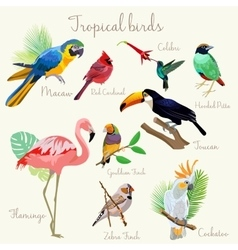 Bright color Exotic tropical birds set isolated vector image