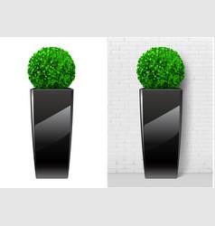 Bush plant in modern black pot vector