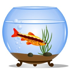 Fish in a round aquarium vector