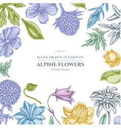 Floral design with pastel bellflower edelweiss vector