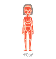 Muscular system of human body vector