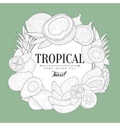 Tropical Fruits Vintage Sketch vector