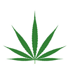 cannabis leaf isolated vector image