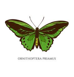 Set hand drawn colored ornithoptera vector