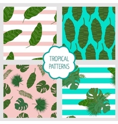 Set patterns Leaves of the tropical palm trees vector image